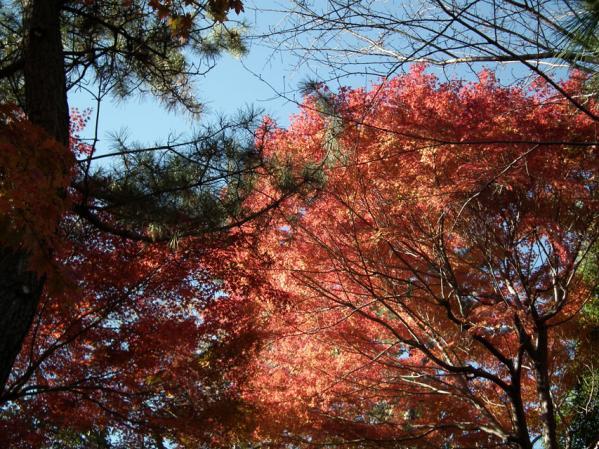 横浜 三ッ池公園の紅葉(8)