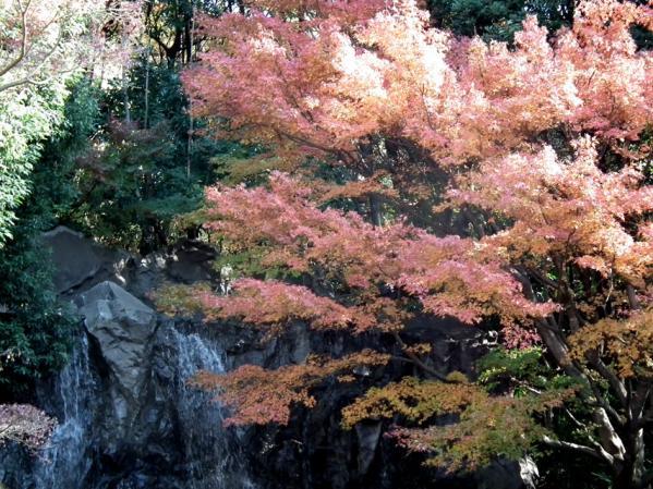 横浜 三ッ池公園の紅葉(9)