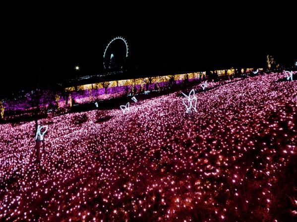 「さがみ湖イルミリオン'11-'12」 光の花畑(1)