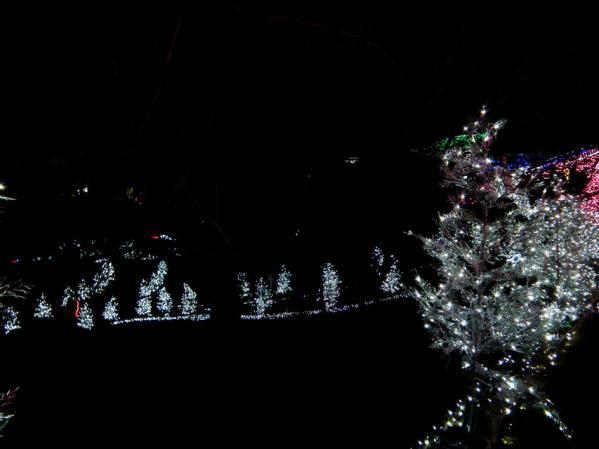 「さがみ湖イルミリオン'11-'12」 光の花畑(4)