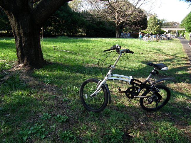 昭和記念公園の中をサイクリング