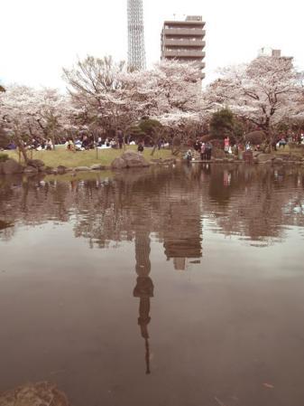 桜と池に映る逆さスカイツリー(1)
