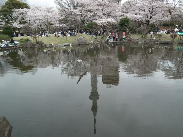 桜と池に映る逆さスカイツリー(2)