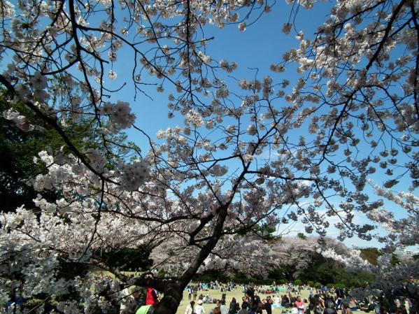広場には花見客が大勢でした