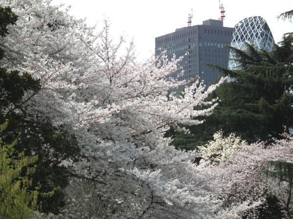 新宿高層ビル群と桜