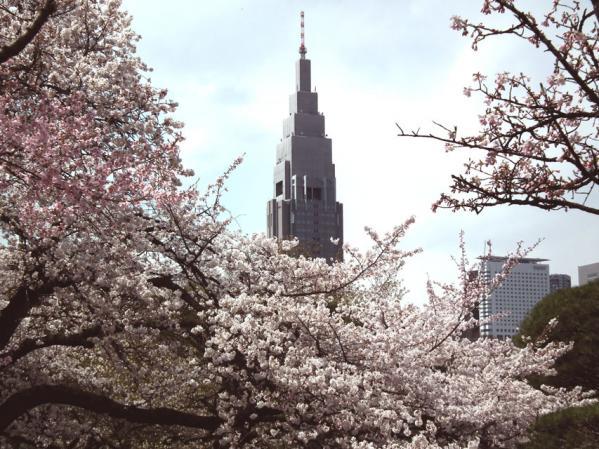 桜とNTT DoCoMoビル