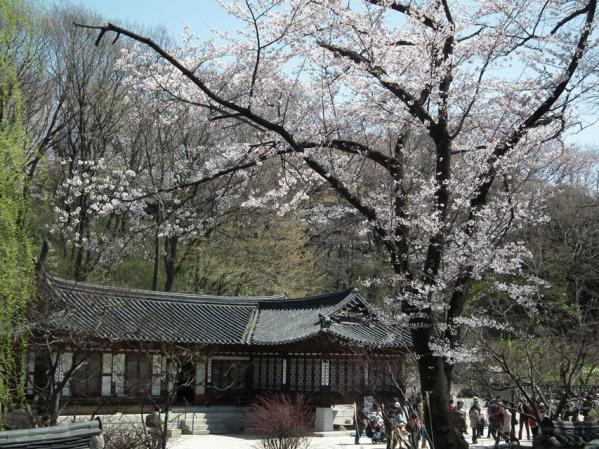 コレア庭園と桜