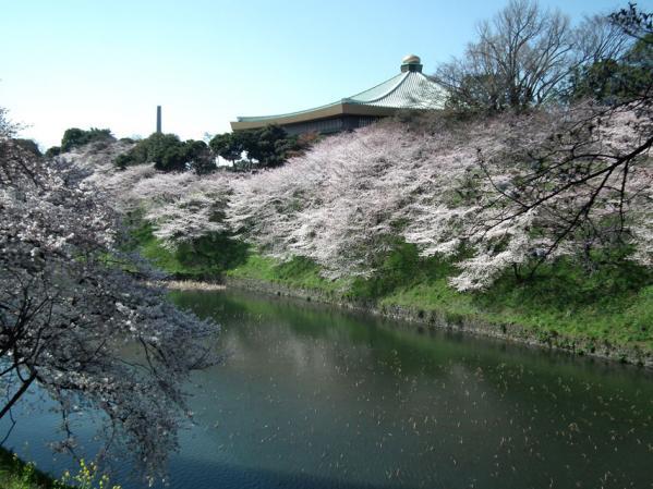 牛ヶ淵の桜と武道館