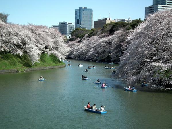 千鳥ヶ淵のボート乗場で撮影した桜(1)