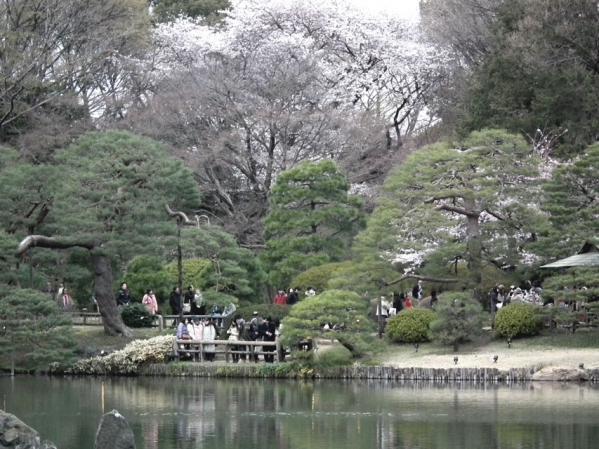 六義園の池付近の風景