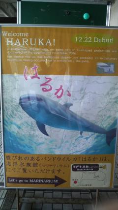 イルカのはるかちゃん