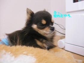 コピー ~ DSCF9460