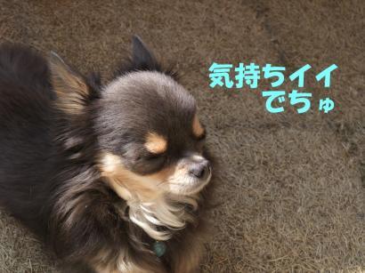 コピー ~ DSCF0110