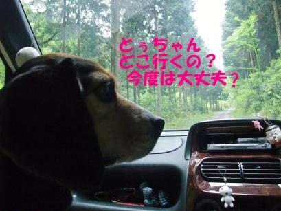 コピー ~ DSCF0349