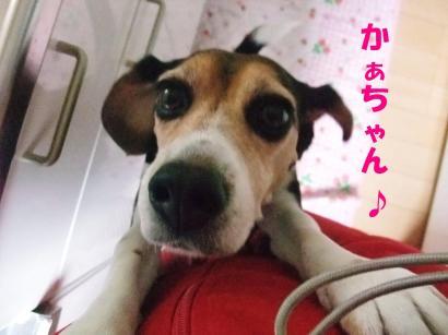 コピー ~ DSCF0496