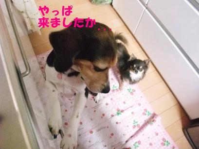 コピー ~ DSCF0502