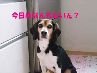 コピー ~ DSCF0795