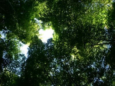 PICT4631_convert_20090116080448.jpg