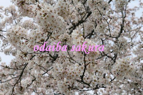IMG_4187_20090412203247.jpg