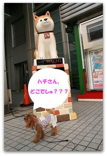 IMG_6211.jpg