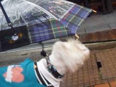 傘さしてプルプル
