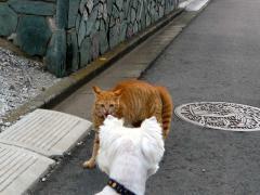 猫とだって遊べる