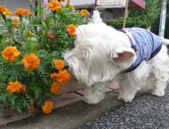 お花だいすき