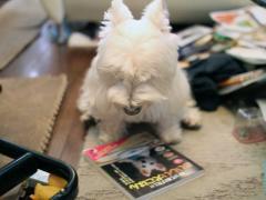 おいしい犬ごはんの本をじっと見つめるやつ