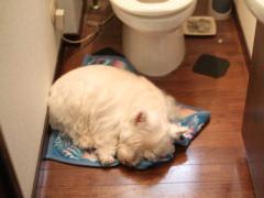 トイレで爆睡してるやつ