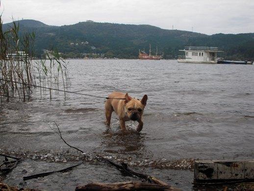 芦ノ湖 ベラチン