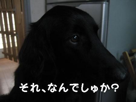 b100203.jpg