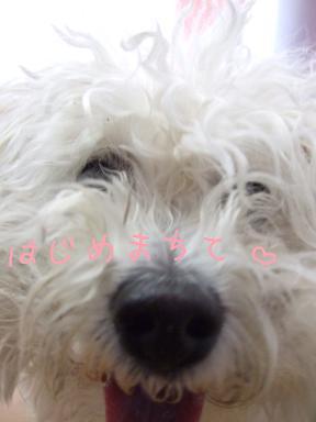 2008 5 10 ハッピーちゃん①