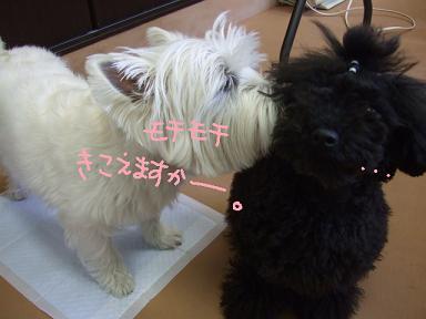 2008 5 10 パフちゃん①