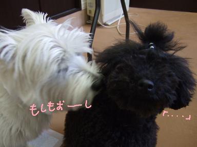 2008 5 10 パフちゃん②