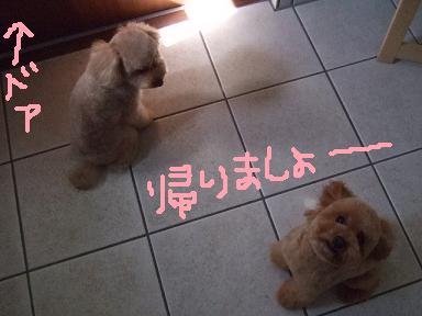 2008 05 ティアちゃん&ミミーちゃん④