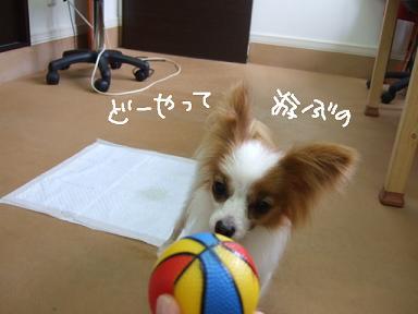 2008 5 25 今日のちゃーちゃん..⑥