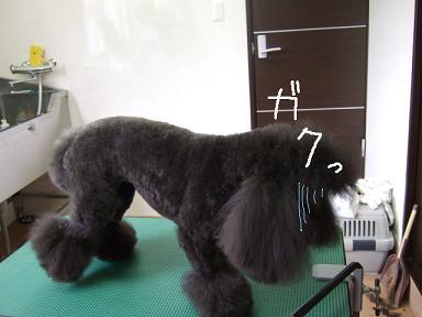 2008 05 まるるちん⑤