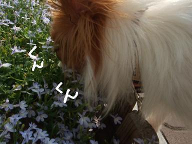 2008.06.28  フラン②