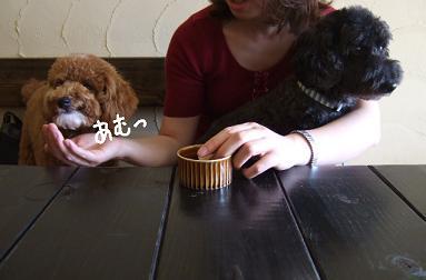 2008.06  チョビ&べス&アン⑧