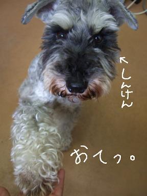 2008.07.06  しゅうくんいらっしゃい...①