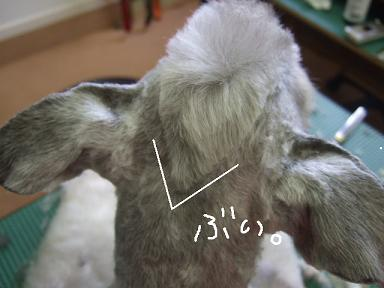 2008.07.06  しゅうくんいらっしゃい...③