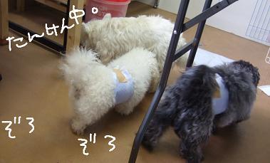 2008.07.08  、モネ空&くら②