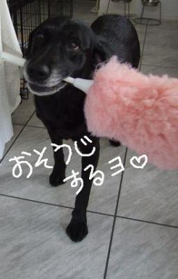 2008.07  おーすけ&ちゅら①