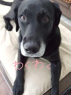 2008.07  おーすけ&ちゅら②