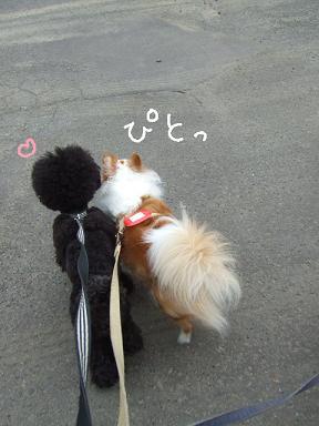 2008.07  おーすけ&ちゅら③
