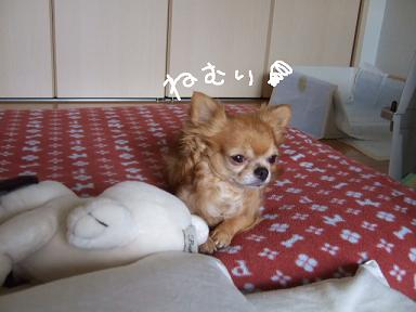 2008.07.14  おーすけ&ちゅらカット②