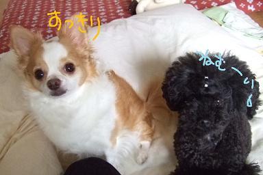 2008.07.14  おーすけ&ちゅらカット③