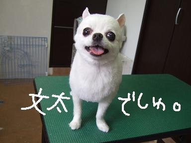 2008.07.22 文太くん③