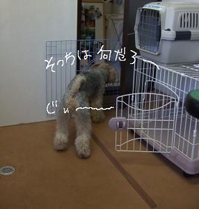 2008.07.26 ロックくん②