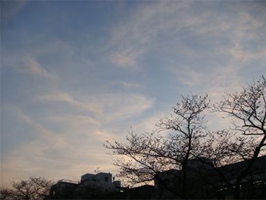 March28,2009sakura1